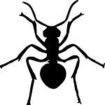 μυρμήγκια-αντιμετώπιση-απολυμάνσεις-απεντομώσεις