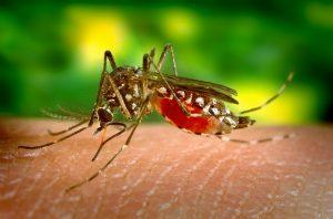 κουνούπια-απεντομώσεις-τρόποι-αντιμετώπισης-τσιμπήματα