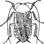 κατσαρίδες απεντόμωση