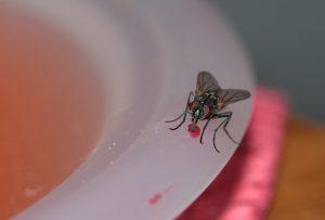 μύγες-αντιμετώπιση-απεντομώσεις