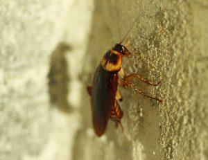 απολύμανση για κατσαρίδες