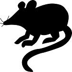 τρωκτικά-ποντίκια-αρουραίοι-μυοκτονιες-σπίτια