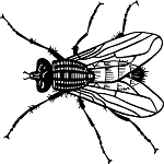 μύγες-απεντόμωση